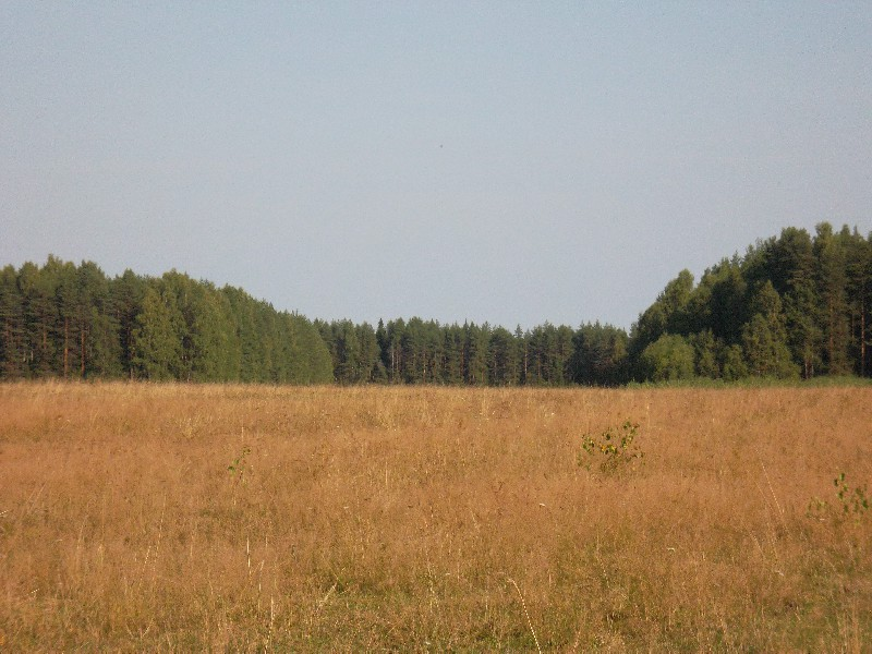 Россия явления природы поле